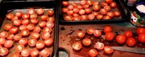 mini tomato day